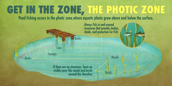 We create awesome infographics see our best infographic for Pond fishing tips