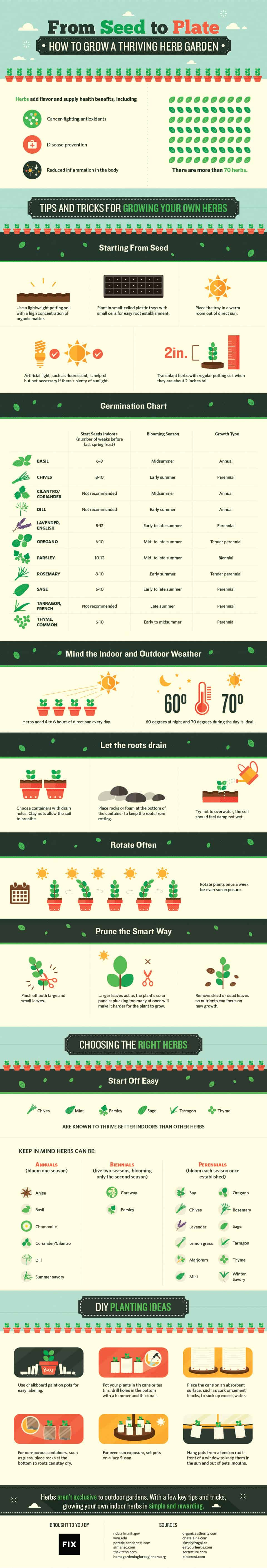 From Seed To Plate: How To Grow A Thriving Indoor Herb Garden Infographic