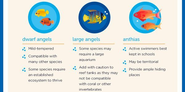 Saltwater Fish Compatibility