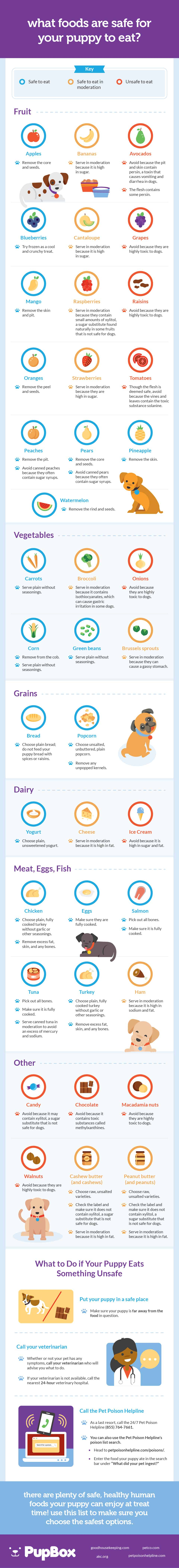 What Foods Are Safe for Your Puppy to Eat